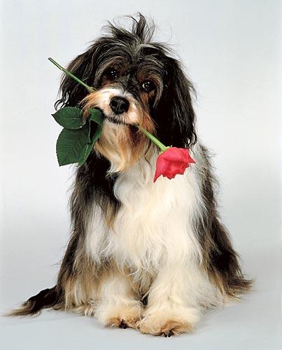 Дарю тебе этот цветок