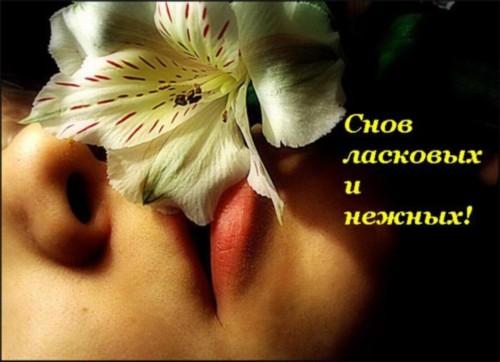 Снов ласковых и нежных!