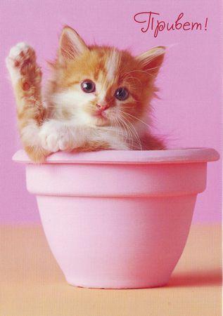 Привет от котенка