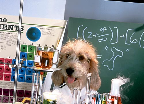 http://www.vampodarok.com/cards/pictures/job/05/den-himika-07.jpg