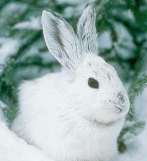 кролик в му